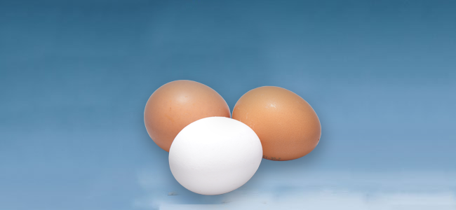 Products | Hybrid Poultry Farm